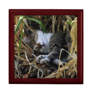 Shy Boy Sleeping Cat Jewelry Box