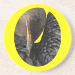 shy cormorant beverage coaster