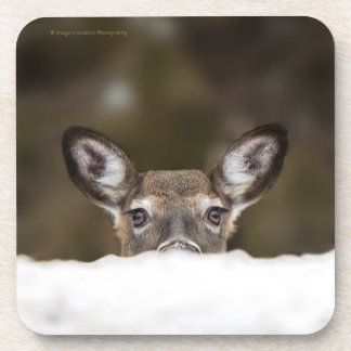Shy deer - coaster