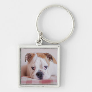 Shy English Bulldog Puppy Keychain