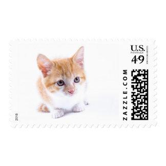 Shy Ginger Kitten Stamp