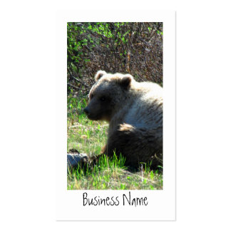 Shy Grizzly Business Card