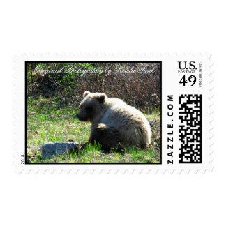 Shy Grizzly Postage