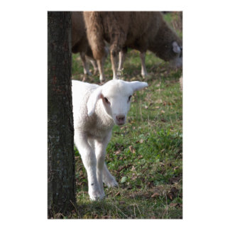Shy lamb stationery