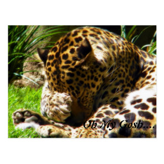 Shy Leopard Forget Me Not Post Cards