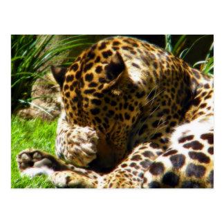 Shy Leopard Postcards