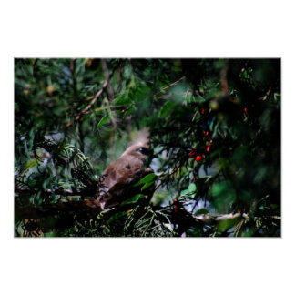 Shy mouse bird in the thicket poster