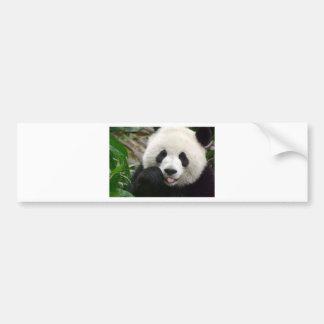 shy panda bumper sticker