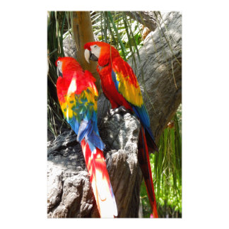 SHY PARROTS STATIONERY