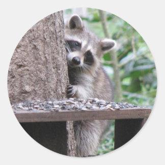 Shy Raccoon Sticker
