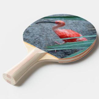 Shy Scarlet Ibis Ping-Pong Paddle