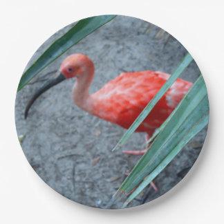 Shy Scarlet Ibis Paper Plate