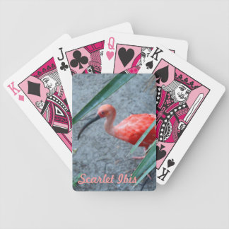 Shy Scarlet Ibis Card Deck