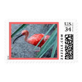 Shy Scarlet Ibis Postage Stamp