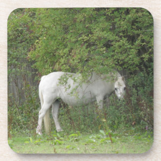 Shy White Horse Cork Coaster