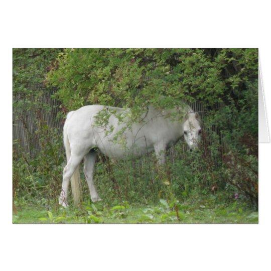 Shy White Horse Greeting Card