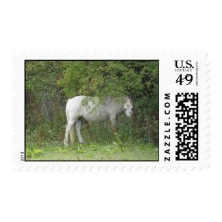 Shy White Horse Postage Stamp