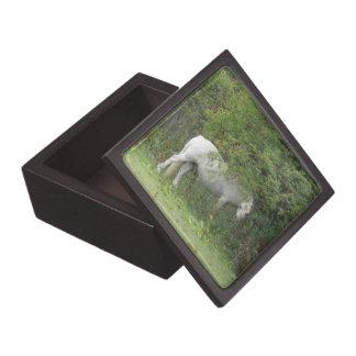 Shy White Horse Premium Gift Box