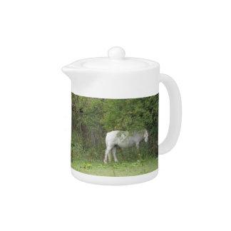 Shy White Horse Teapot