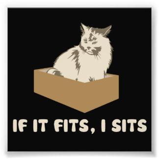 Si cabe, I sienta el gato Cojinete