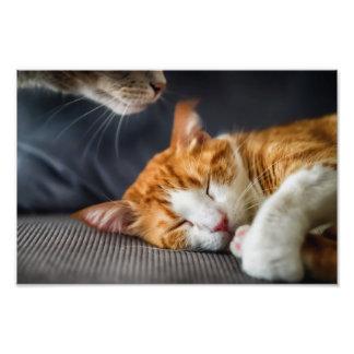 Si huele como un gato…. impresion fotografica