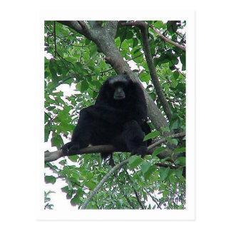 Siam Gibbon Postcard