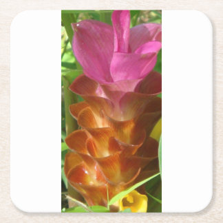 SIAM TULIP IS A BIENNIAL PLANT ROOTS IN THE SOIL SQUARE PAPER COASTER