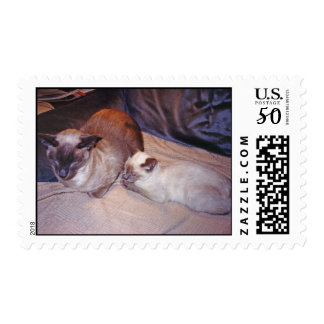 Siames Cat with Tortie Point Postage