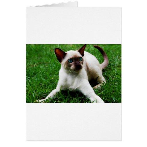 Siamés en la hierba tarjeta de felicitación