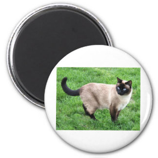 SIAMESE BEAUTY 2 INCH ROUND MAGNET