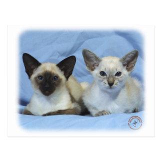 Siamese Cat 9W055D-100 Postcard
