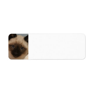 Siamese cat address labels