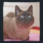 "Siamese Cat Bandana<br><div class=""desc"">A beautiful Siamese cat decorates this lovely bandana</div>"