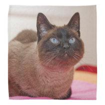 Siamese Cat Bandana