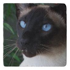 Siamese Cat Blue Eyes Trivet