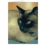 Siamese Cat Cards