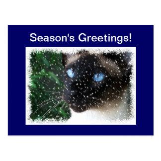 Siamese Cat Christmas Winter Postcard