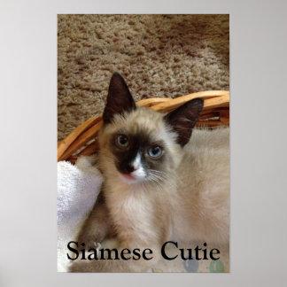 Siamese cat cute print
