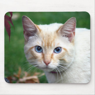 Siamese cat face mousepad