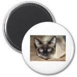 Siamese Cat Fridge Magnets