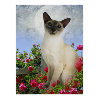 Siamese Cat in rose bed Poster