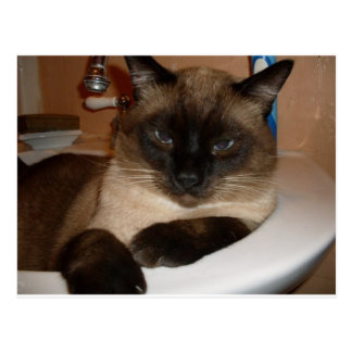 Siamese Cat in Sink  Postcard