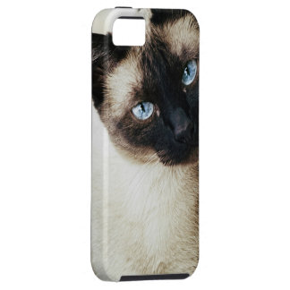 Siamese Cat iPhone SE/5/5s Case