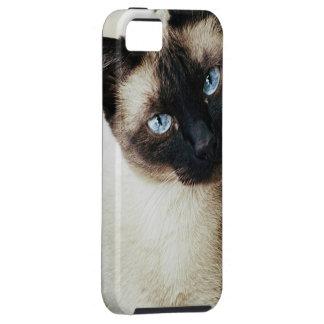 Siamese Cat iPhone SE/5/5s Case