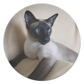 Siamese Cat Jazell Dinner Plate