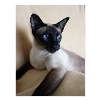 Siamese Cat Jazell Postcard