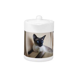 Siamese Cat Jazell