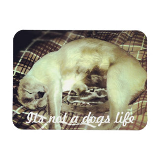 Siamese cat Magnet Its not a dogs life