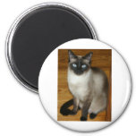 Siamese Cat Magnets