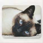 Siamese Cat Mouse Pad